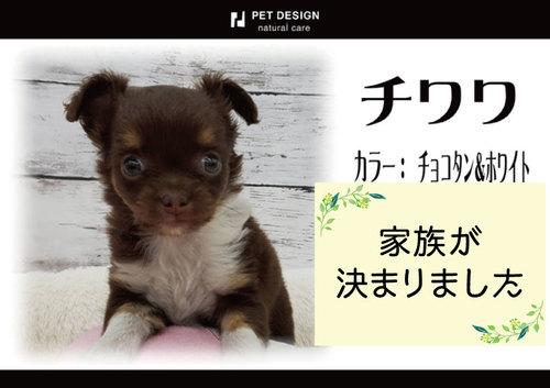 ペットデザインの画像