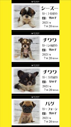 ペットデザインポスター2