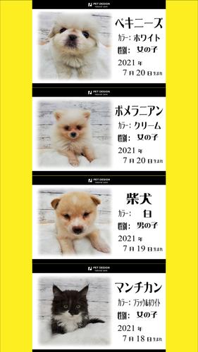 ペットデザインポスター3