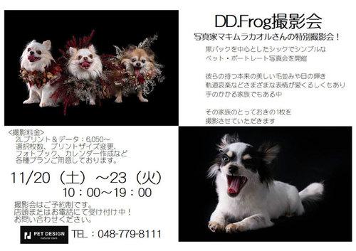 DD.Frog撮影会